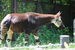 Yokohama Zoo ''Zoorasia''