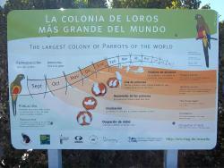 Colonia de Loros Barranqueros