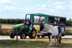 World Horse Welfare Hall Farm