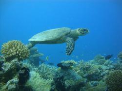 Muraka Diving
