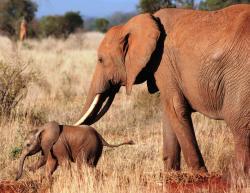 Simo Kenya Safaris Day Tours