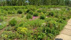 Ufa Botanical Garden