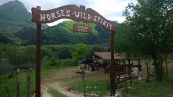 Horse's Wild Spirit