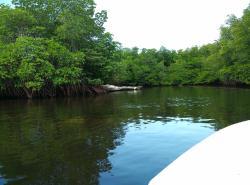 蓝梦岛红树林