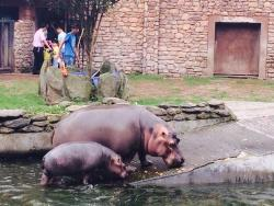 Changsha Ecological Zoo