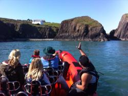 Blue Ocean Adventures - Ramsey Island Wildlife Boat Trips