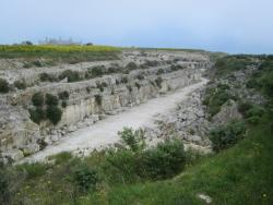 Broadcroft Quarry Nature Reserve