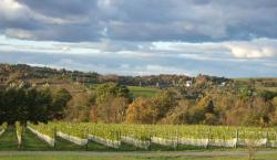 L'Acadie Vineyards
