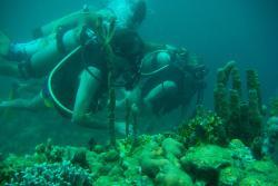 Samba Diving