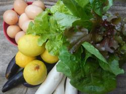 Seasonal Freshly harvested Produce we buy weekly
