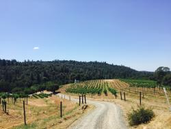 Butterfly Creek Winery & Vineyards