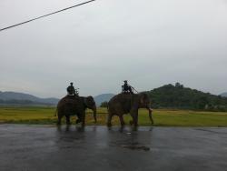 Mr Vu's Dalat Road Rider