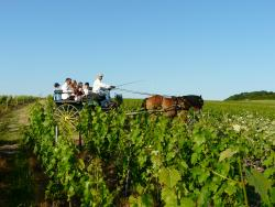 La Vigne du Roy Champagne Day Tours