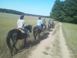 Outrider Horseback Riding
