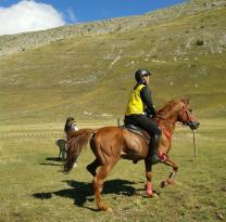 Maneggio Team Horse