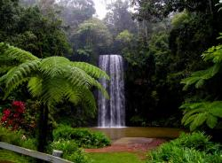 Cairns Tableland Tours