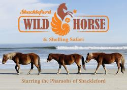 ‪Shackleford Wild Horse & Shelling Safari‬