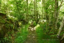 Ruta Asentadero - Bosque de Los Espejos