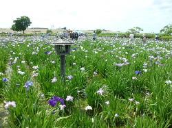 Kloiwa Shobu Garden