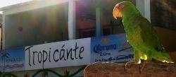 Tropicante Ameri-Mex Grill