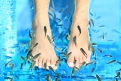 Fresh Feet Fish Spa