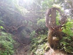 Mt. Nokogiri