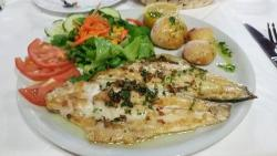 Gambrinus Sea Bass