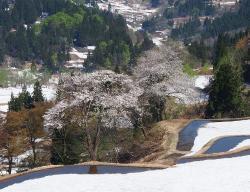 Gimyo Rice Terrace
