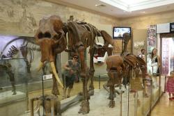 Natural History of Tatarstan Museum