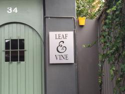 Leaf and Vine