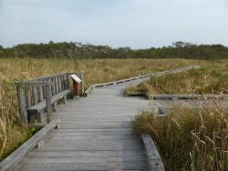 Onnenai Boardwalk