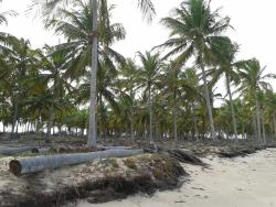 Iemanja Beach