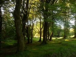 Knockmany Forest