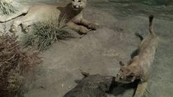 Zoologico Parque del Nino