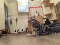 Meomi Cat Cafe