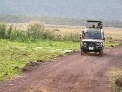 ‪African Servalcat Safaris - Day Tours‬