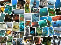 DSM Lombok Dive Center