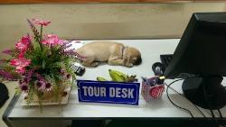 The tour desk - occupied by the puppy