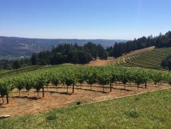 Smith-Madrone Vineyards