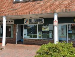 Bluebird NY