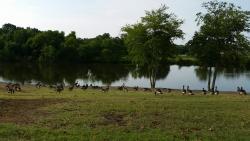 Olive Branch City Park