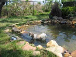 Nassau Humane Society Dog Park