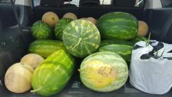 Cordele State Farmers Market