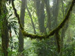 Monteverde Morning Walk