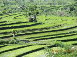 Dewa Tirta Bali Tours
