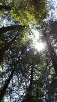 Pipi Campground