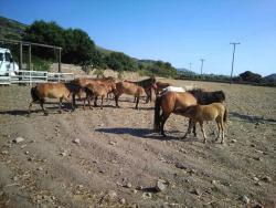 Mouries Farm
