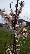 E.P. Orchards