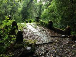 Gaoligongshan National Natural Reserve