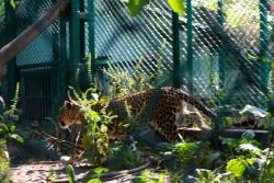 Dachigam Wildlife Sanctuary